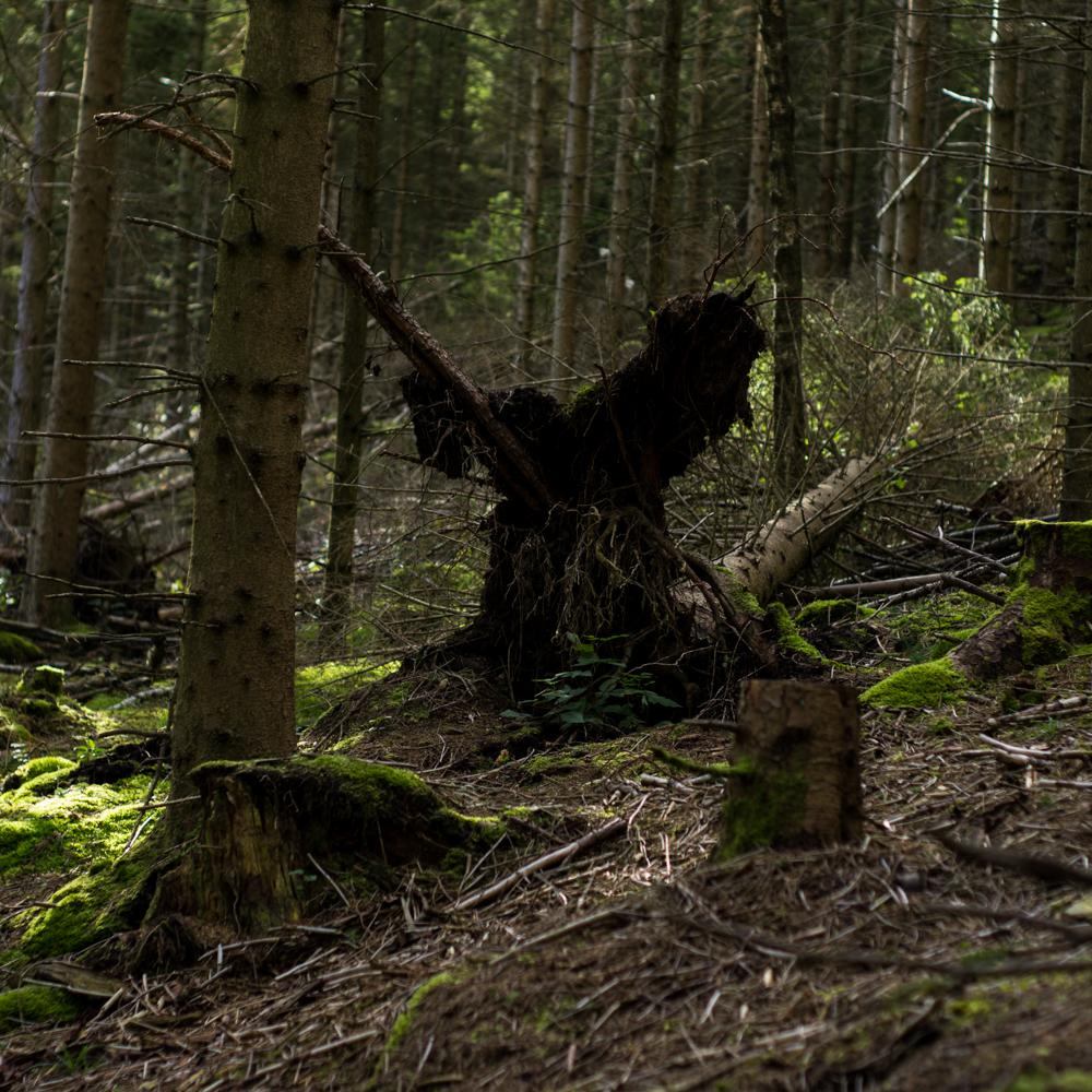 Troll i Arboretet